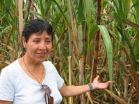 Cecilia is the President of CADO, and here is showing us how their fair trade alcohol is made from organic sugar cane.