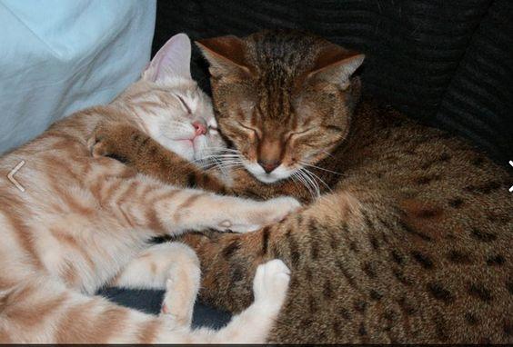 Freya and Teego