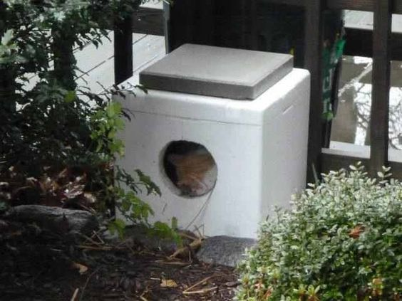Outdoor Cat House: Outdoor Cat House From Cooler