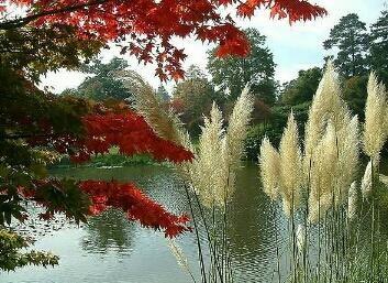 Contigo espero sin melancolía, porque tienes la fuerza para convertir la ensoñación en realidad.     Eres creador