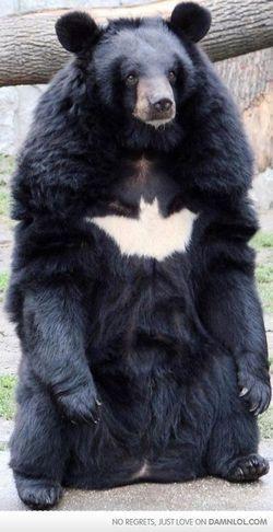 Batbear!