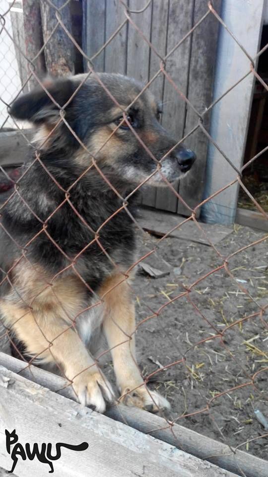 Besuch Tierheim Sirius | PAWU | Protect Animals with us