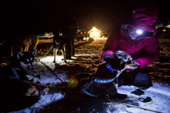 How volunteer vets care for Iditarod dogs along the 1,000-mile Alaska trail | Alaska Dispatch