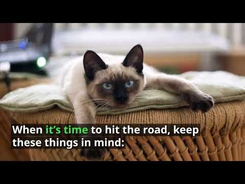 Traveling With Cats Find Out How To Keep Your Cat Comfortable During A Cross Country Trip Plus Get Tips On Getting Them Ready Cat Travel Big House Cats Cats