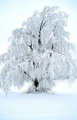 winter wonder tree
