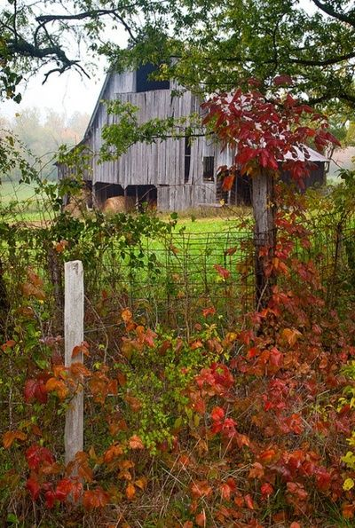 Beautiful autumn colours & old wooden barns: