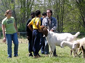 Chenoa Manor encourages the positive interaction of teenagers with our animal residents.    The importance of this experience is to instill a sense of compassion and respect toward other individuals through positive interaction with animals. If a young person can develop a relationship with an animal resident based upon mutual trust, patience, and understanding, then those same qualities may be carried over to the teen's relationships with other individuals.