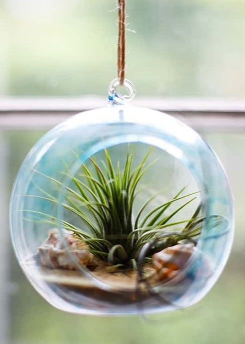 Hanging Glass Globe Terrarium Ideas With A Coastal Beach Theme