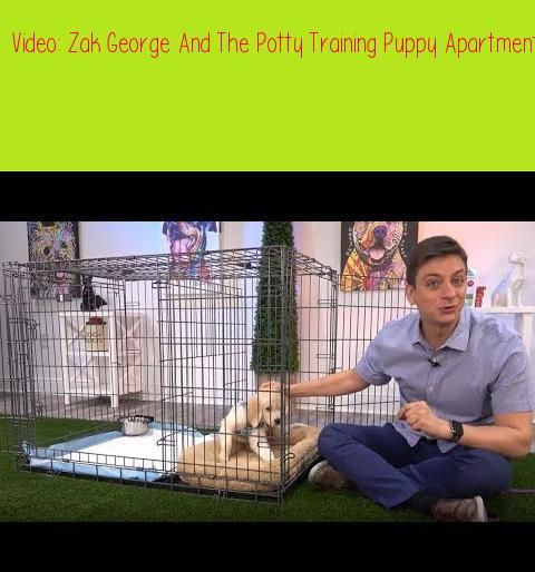 Zak George And The Potty Training Puppy Apartment How To Potty Train A Puppyzak George Has Puppy Training Potty Training Puppy Potty Training Puppy Apartment