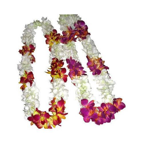 The Reasons Why We Love Orchid Flower Varmala Price Orchid Flower Varmala Price In 2020 Orchid Flower Orchids Flowers