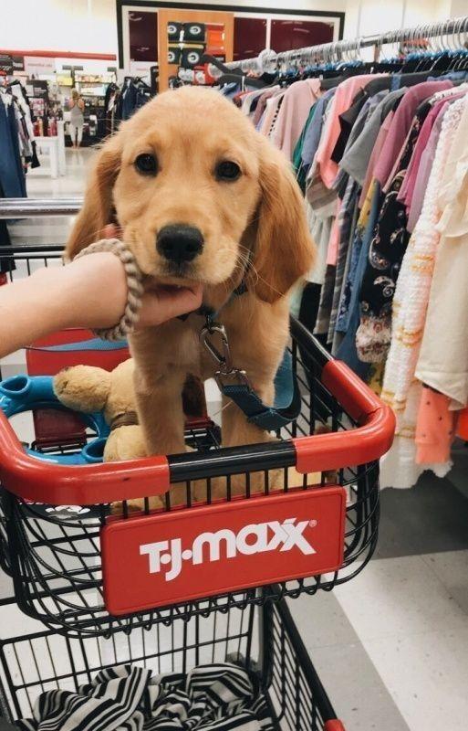 𝐩𝐢𝐧𝐭𝐞𝐫𝐞𝐬𝐭 𝐨𝐥𝐢𝐯𝐢𝐚𝐛𝐨𝐥𝐥𝐞𝐬 𝐬𝐩𝐨𝐭𝐢𝐟𝐲 𝐨𝐥𝐢𝐯𝐢𝐚 𝐫 𝐛𝐨𝐥𝐥𝐞𝐬 Cute Animals Puppies Cute Baby Animals