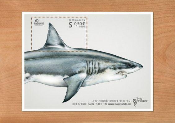 Pro-Wildlife-Campaign-640x455.jpg