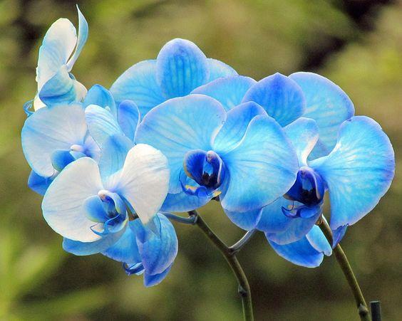 pale blue orchids - Google Search