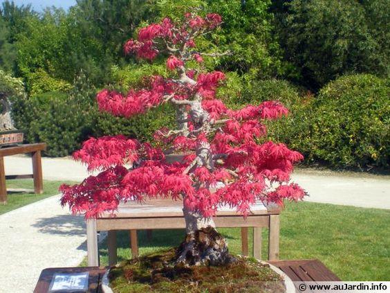Le bonsaï : L'arrosage fait (presque) tout !