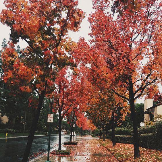 Pinterest: julikutil ☼ | Fall™ | Pinterest | Beautiful ...