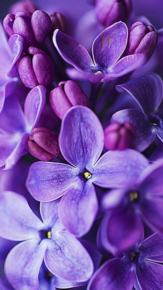 Lost Purple By Deeevilish On Deviantart In 2020 Purple Flowers Flower Aesthetic Flowers Photography
