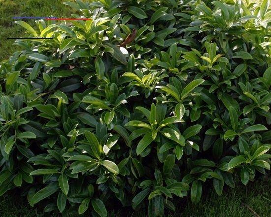 6 Beliebte Immergrune Pflanzen Fur Den Garten Immergrunestraucher Nicht Nur Im Winter Sind Immergrune Pflanzen Wichtig Um Dem Garten Struk Amigurumi Linda