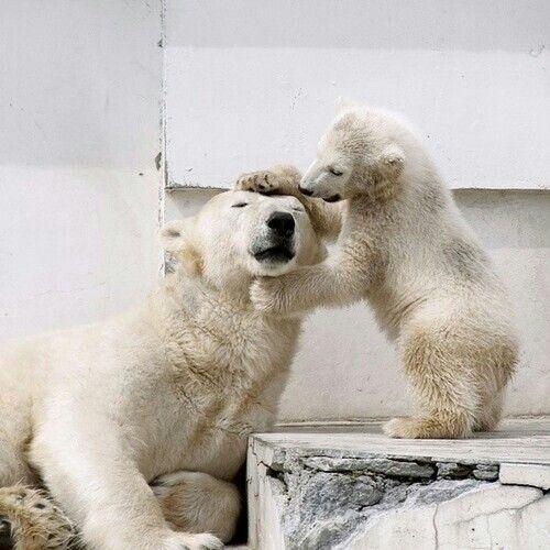 かみ合わせを見るかわいいクマ