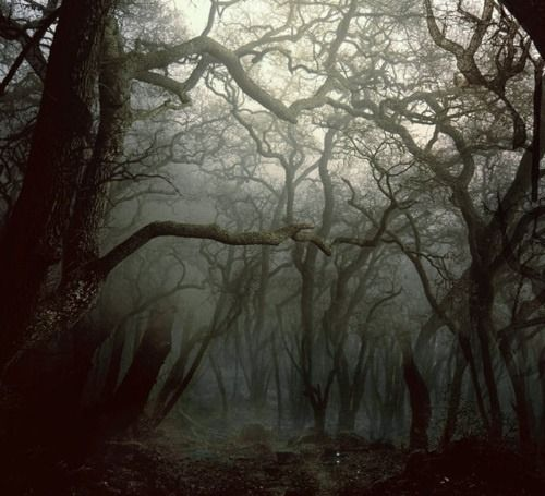 Scary Trees Dark Nature Forest Mist Woods Branch Magical Mystical Dark Forest Branches Myst Dream Places Nature Photography Nature Landscape