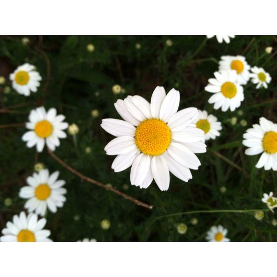 I heart daisies!!! :)