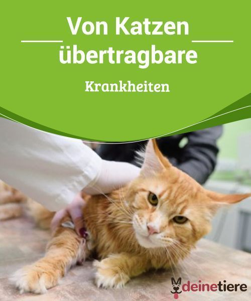 Von Katzen Ubertragbare Krankheiten Katzen Ikea Katzen Und