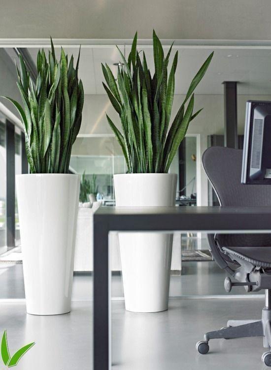 Einrichtungsideen Moderne Burobepflanzung Google Suche Wohnideen