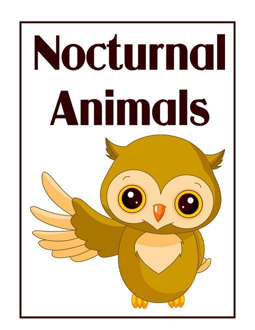 Nocturnal Animals Online
