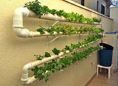 PANELATERAPIA - Blog de Culinária, Gastronomia e Receitas: Como Fazer uma Horta Hidropônica