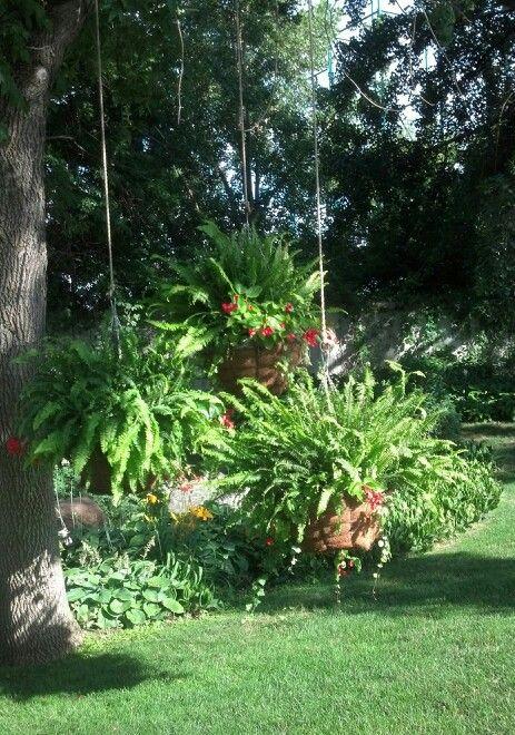 Hanging Baskets Under Trees Flower Garden Pinterest