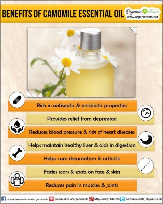 Health Benefits of Camomile Essential Oil: The health benefits of camomile essential oil can be attributed to its properties as an antispasmodic, antiseptic, antibiotic, antidepressant, antineuralgic, antiphlogistic, carminative, cholagogue, cicatrisant, emenagogue, analgesic, febrifuge, hepatic, sedative, nervine, digestive, tonic, antispasmodic, bactericidal, sudorific, stomachic, anti inflammatory, anti infectious, vermifuge, and vulnerary substance.