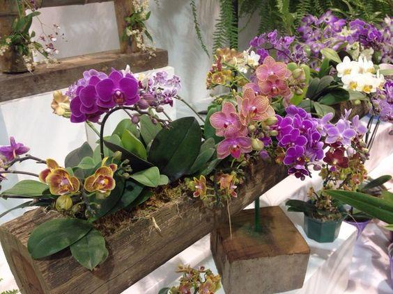 Minis google and ems on pinterest - Como cuidar una orquidea en casa ...