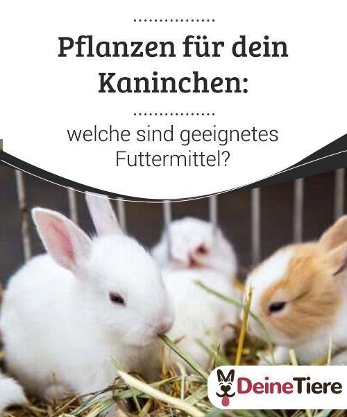Pflanzen Fur Dein Kaninchen Was Eignet Sich Zur Futterung My Animals In 2020 Kaninchen Kaninchenbabys Kaninchen Ernahrung