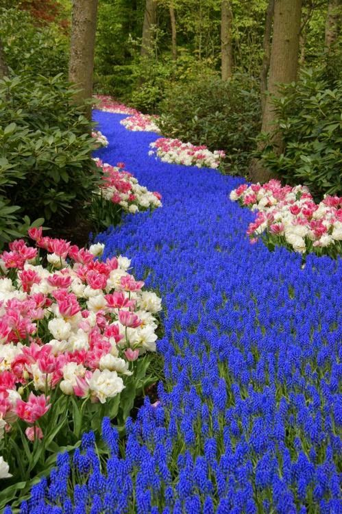 Keukenhof flower garden, also known as the Garden...