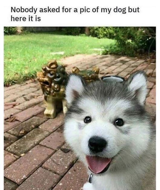 Eighteen Cute Dog Memes That Are Worth A Tail Wag Memebase Funny Memes Cute Dog Memes Dog Memes Cute Dogs