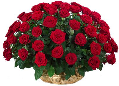 A collection of beautiful dark red roses furnish with green leaves in hand crafted basket. A perfect bunch to bring smile on your special person's face. These roses help you express your feelings. Free delivery from florist across India.: