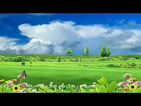 Natural Flower Background Video Beautiful Flower Garden In 2020 Beautiful Flowers Garden Flower Backgrounds Flower Garden