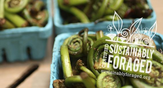 The Institute for Sustainable Foraging in Traverse City is the first organization in the country to offer certification for sustainably foraged goods.