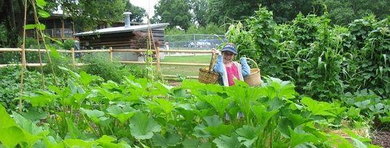 Companion Planting/Kid's Gardening