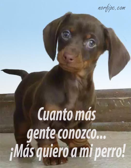 Frases Dedicadas Al Amor De Mi Perro Y Su Fidelidad Perros