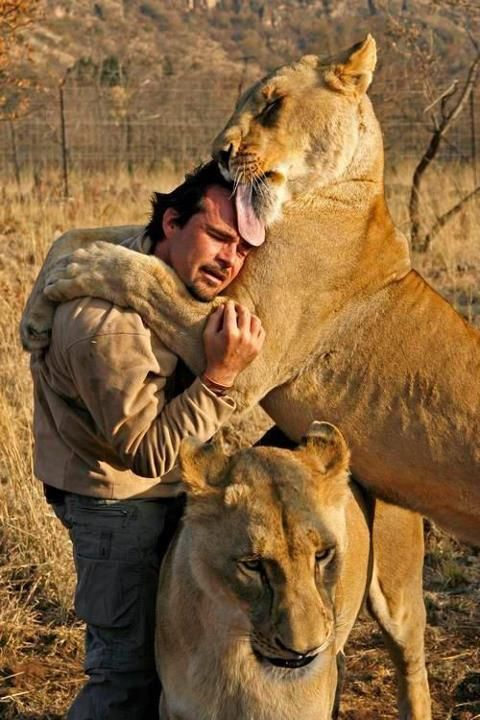 Lion hugs and kisses