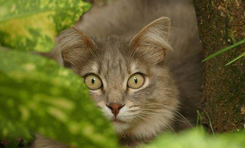 La chatte à la voisine (2) Très belle avec une expression si intense et on la comprend quand on sait qu'elle vient de croiser mon regard au détour d'un bosquet !.... ,)