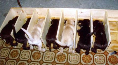 Feeding area.  We talked about doing this before.  That way you know how much each puppy is getting.
