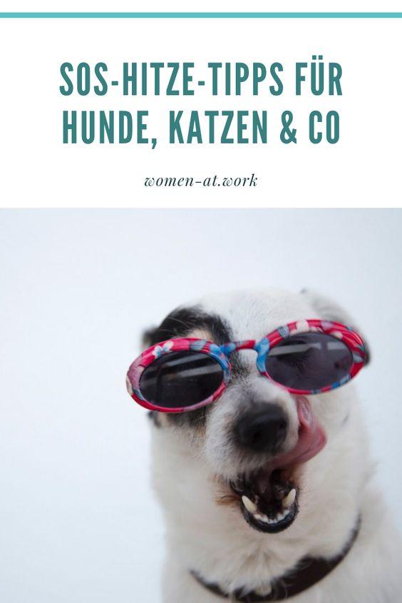 Echt cool! SOS-Hitze-Tipps für Hunde, Katzen & Co