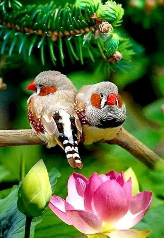 Beautiful Nature: hermosas aves
