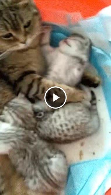Esse gatinho brincalhão não está querendo dormir
