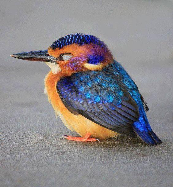 Cute bird blue