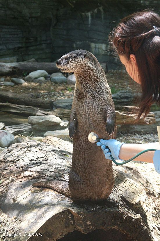 I Don T Know I Guess Human Wants To Hear My Breakfast Otters