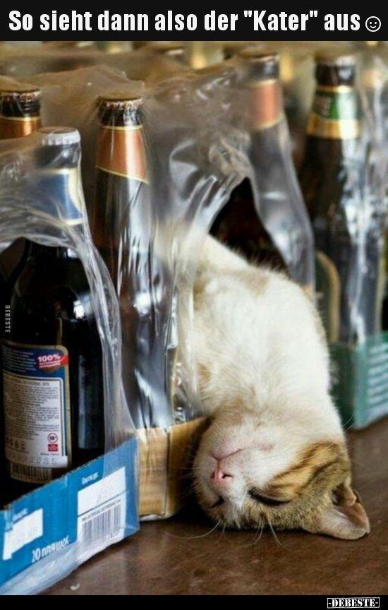 So Sieht Dann Also Der Kater Aus Katzen Haustiere Seltsame Katzen