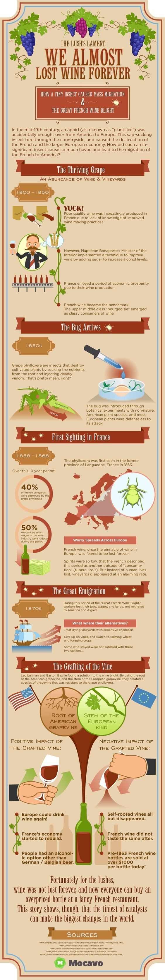Before we worried about global warming taking wine away from us in the 21st century, a tiny insect nearly demolished the French wine industry in the 19th century #wine #wineeducation