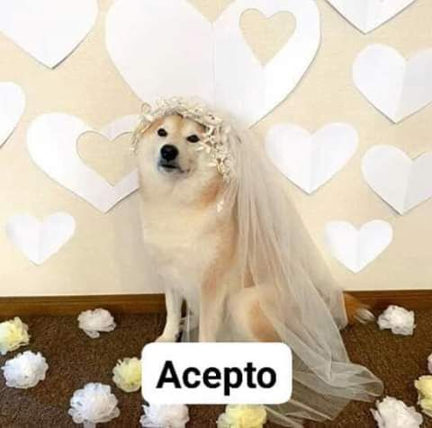 H?????????????????s Memes Divertidos Memes Romanticos Memes Lindos